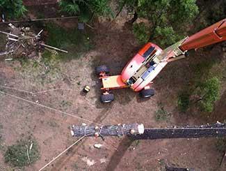Large Tree Removals Melbourne