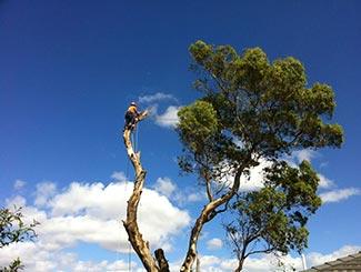 Safe Tree Removal Melbourne
