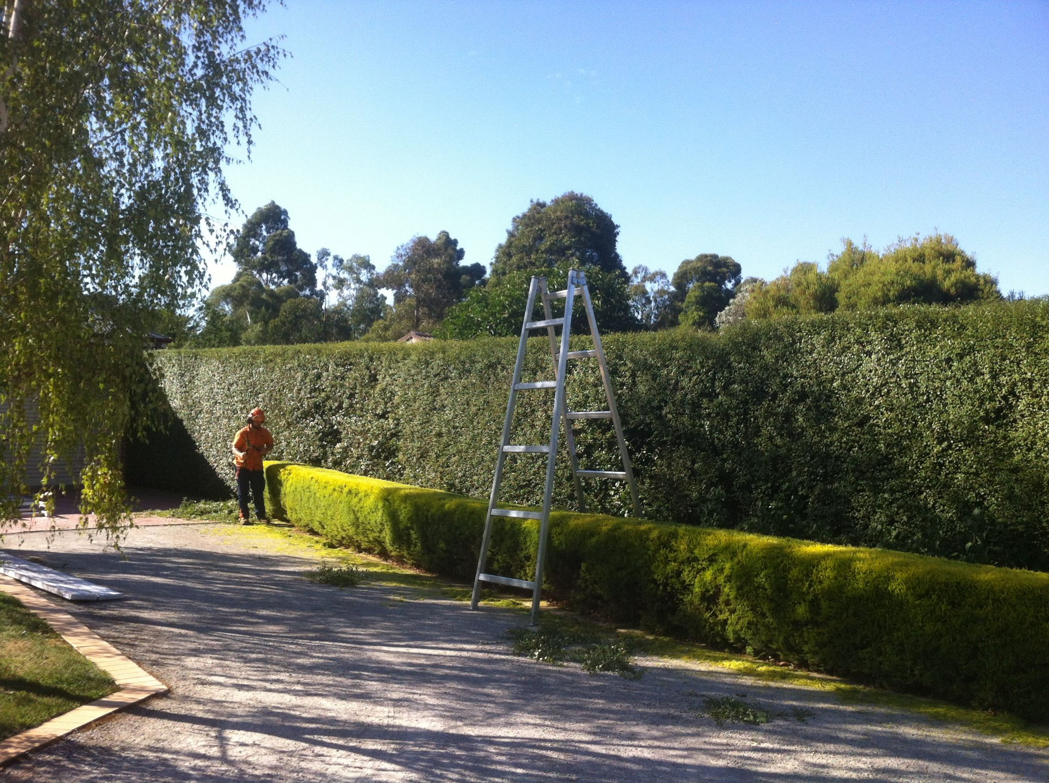 From large conifer hedges to small box hedges, we can trim them all.
