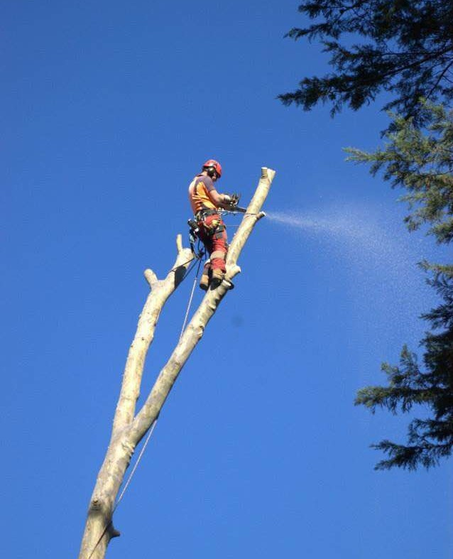 Why choose an arborist?