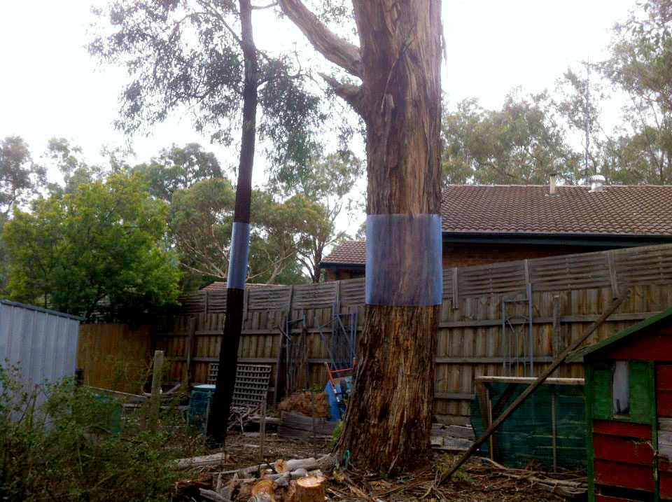 Installing possum guards on your trees is a great way to avoid damage.