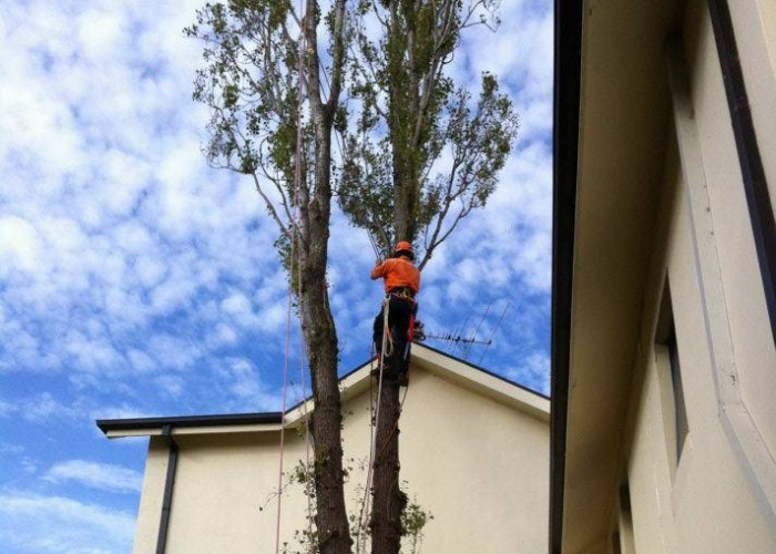 Tree Pruning and Hazard Reduction