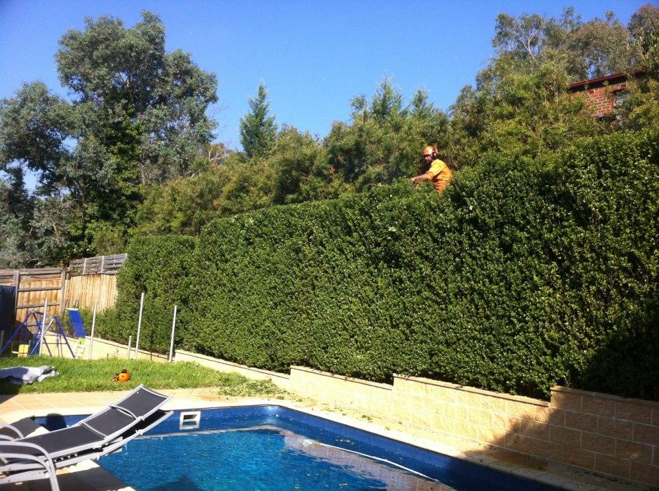 Regular maintenance is key to a healthy beautiful hedge.