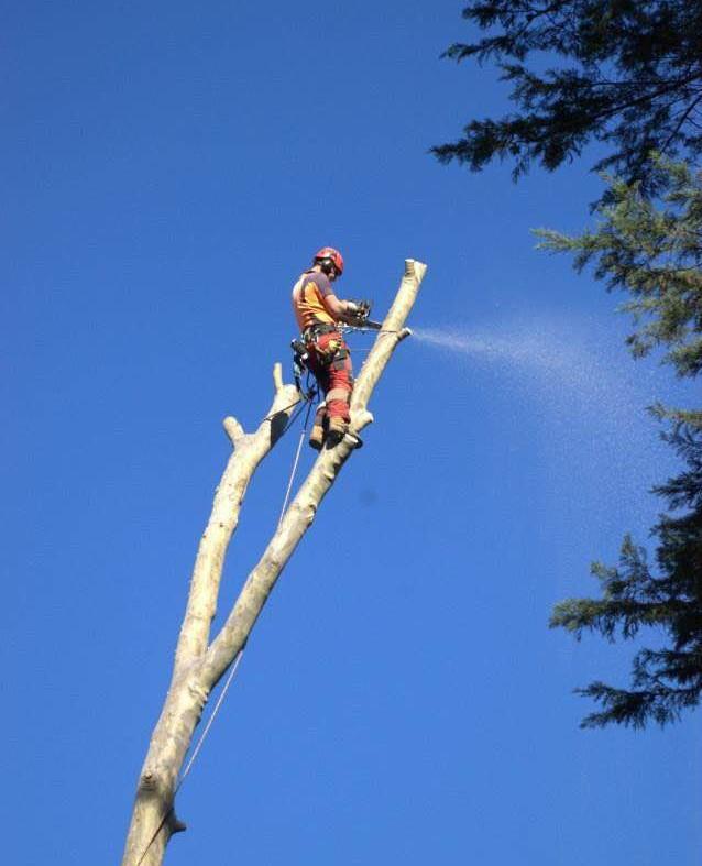 Why choose an arborist?