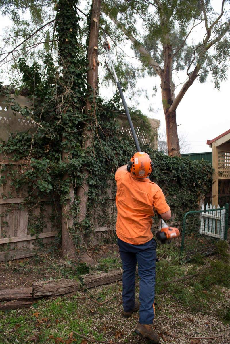 Use a qualified and experienced arborist for professional pruning