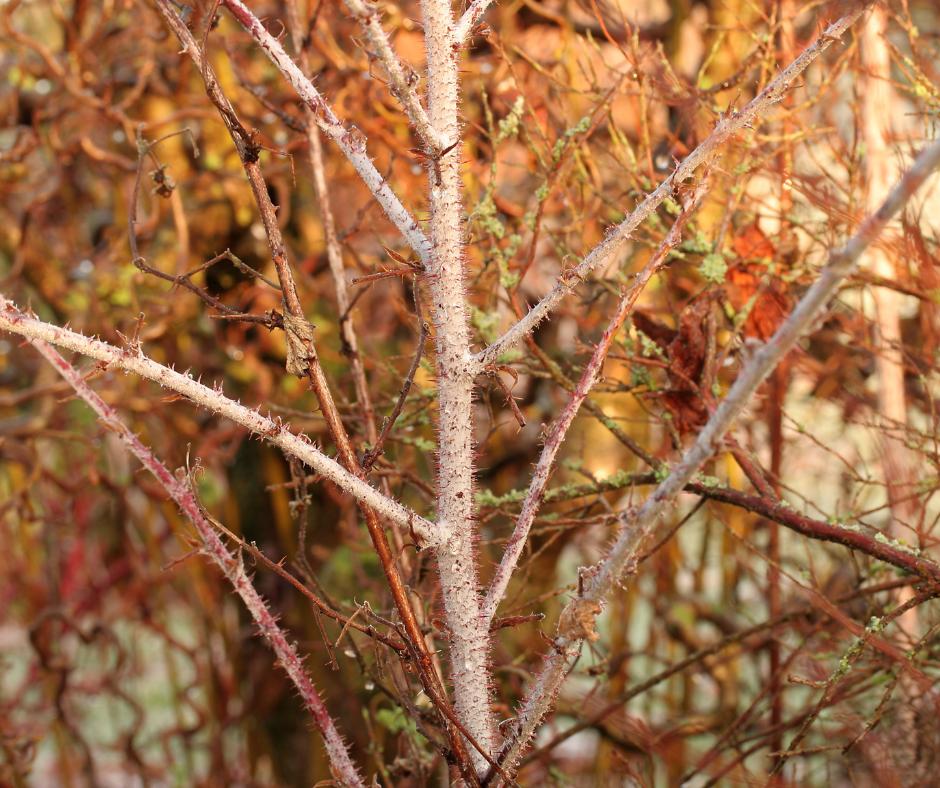 A winter garden may still need watering.